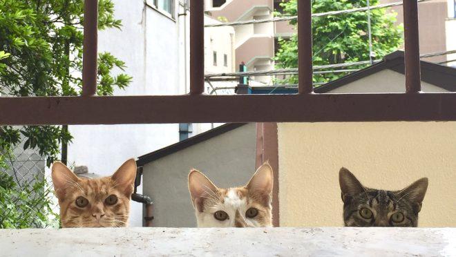 臆病トリオ|庭×猫…ときどき犬フォトコンテスト