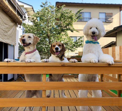 おかえり|庭×猫…ときどき犬フォトコンテスト