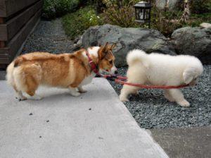 散歩行きますよ!|庭×猫…ときどき犬フォトコンテスト