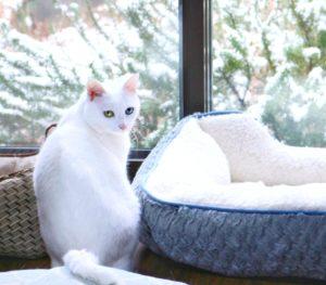 雪の庭|庭×猫…ときどき犬フォトコンテスト
