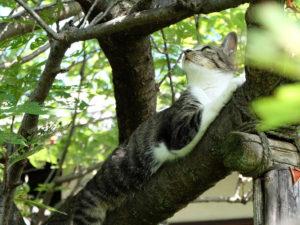 ねこの木|庭×猫…ときどき犬フォトコンテスト