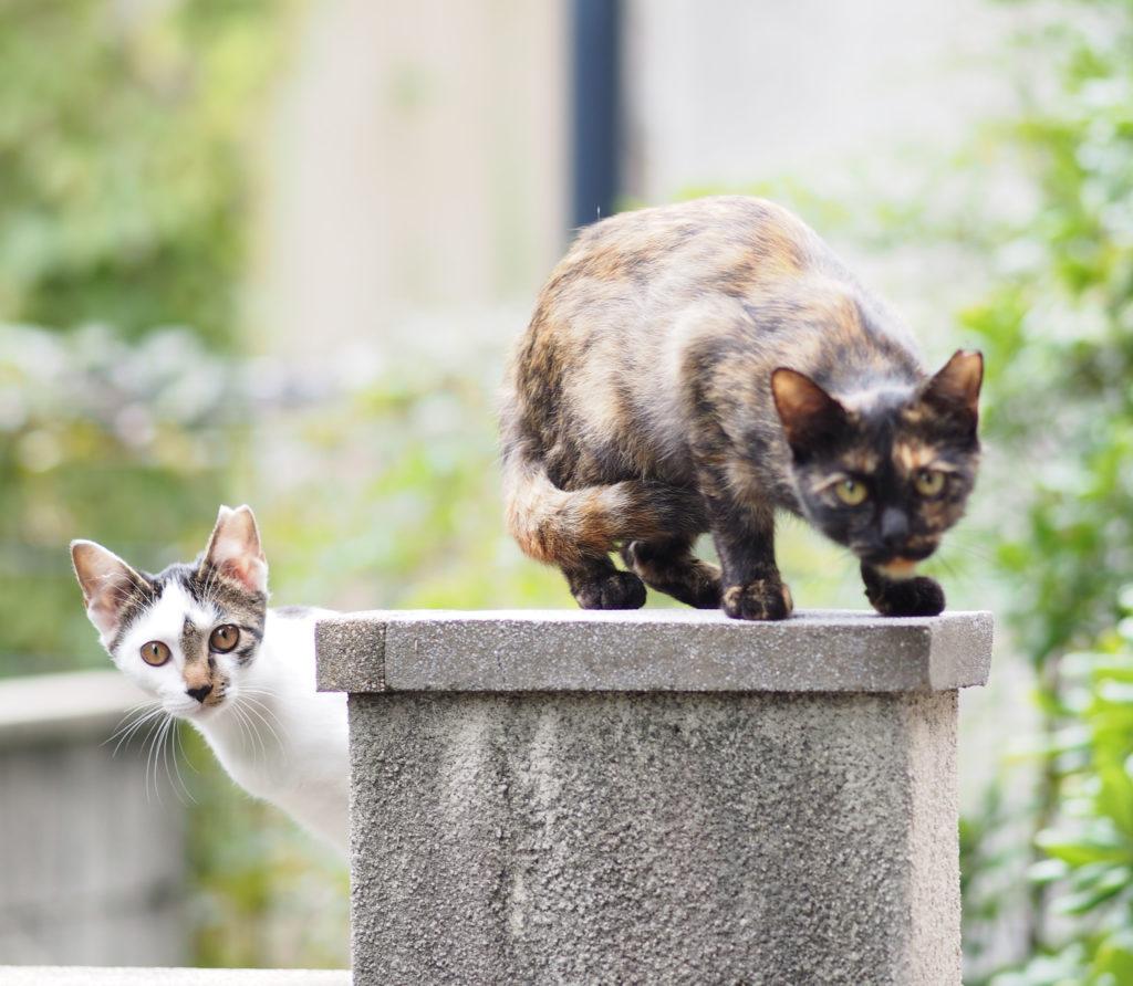 さびちゃんとひょっこりはん|庭×猫…ときどき犬フォトコンテスト