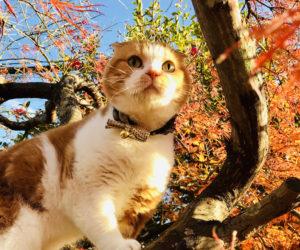 紅葉狩り|庭×猫…ときどき犬フォトコンテスト