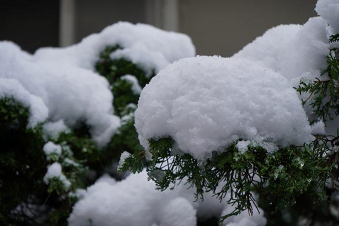 シンボルツリー 寒冷地