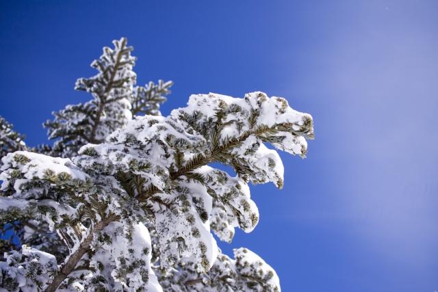 寒い時期の木の写真