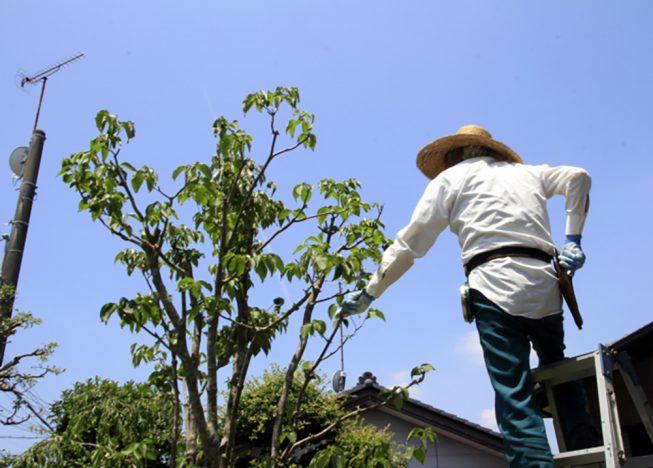 庭木 剪定 植木