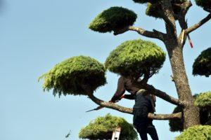植木 剪定
