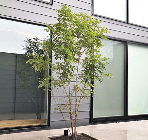 木1本の写真