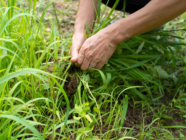 雑草、草むしり
